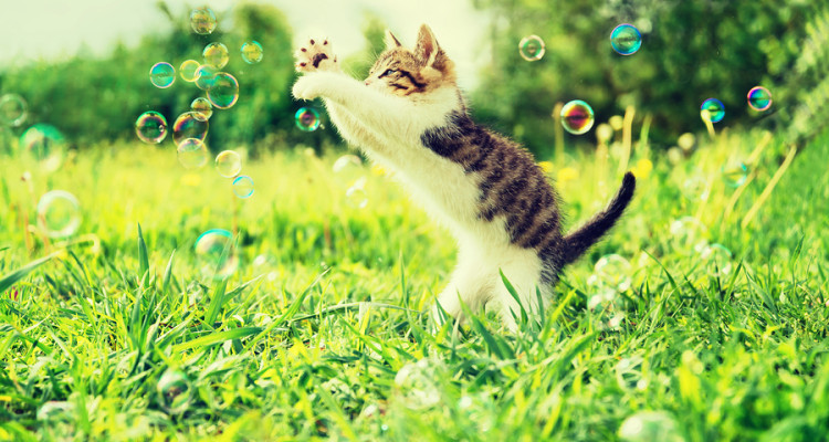 Cute little kitten playing with soap bubbles on summer grass outdoor