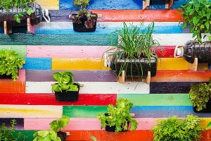 10 Vertical Garden ideas