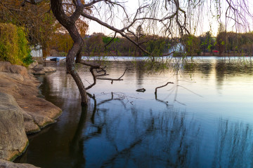 Zoo Lake, Johannesburg